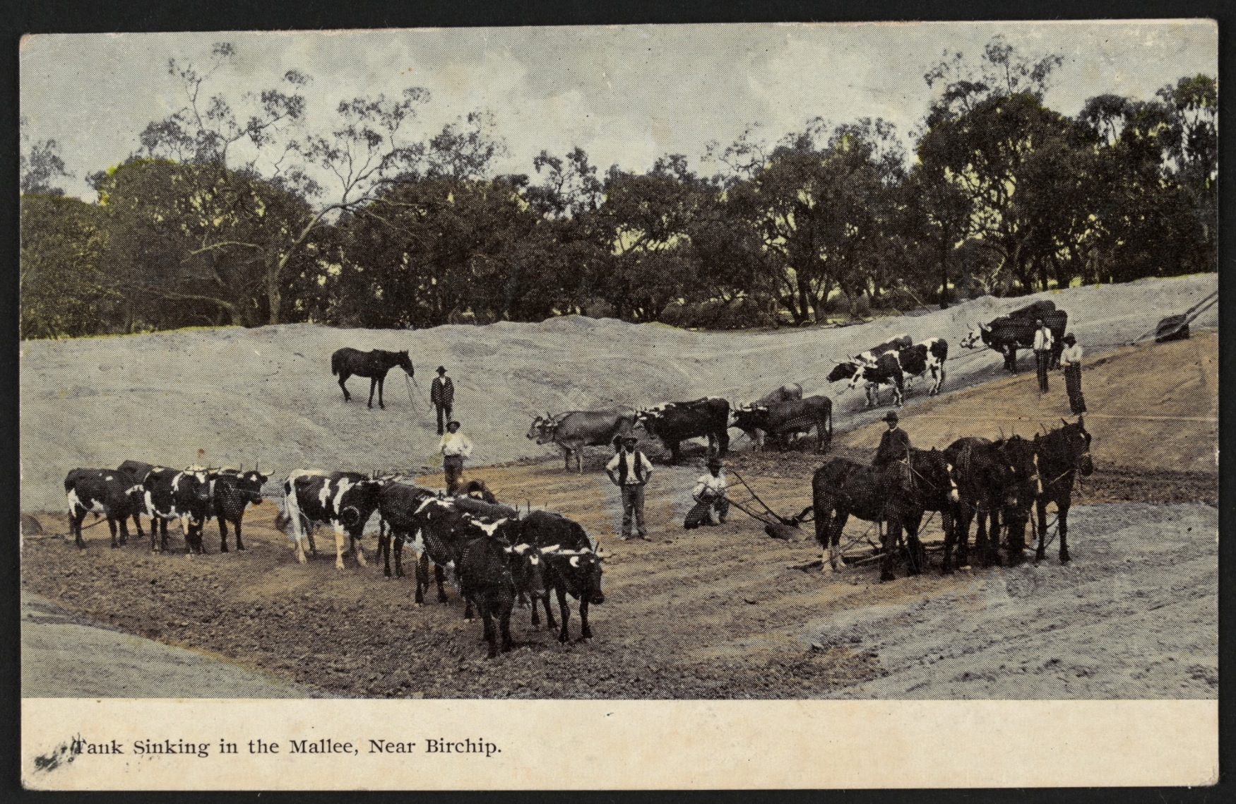 tank sinking in the mallee  near birchip  ca  1907